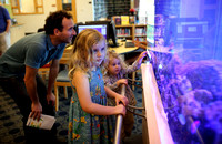Saltwater reef aquarium returns to Princeton Public Library
