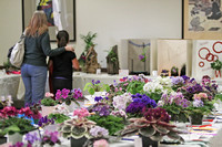 "63rd annual ""Under The Big Top"" Garden State African Violet Club Show"
