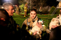 Firefighters save dogs
