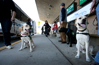 Seeing Eye Puppy Raising Program visits Trenton-Mercer Airport