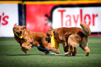 Thunder Bat Dogs frolic after team photo