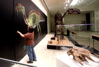 "Paleoartist Jason ""Chewie"" Poole draws a life-size rendering of the Hadrosaurus 3/21/2014"