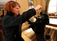 Poodles will be competing in the Masters Agility Championship at Westminster in February, Jan. 26, 2014