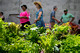 Crisis Ministry's thriving community garden project Hanover Garden