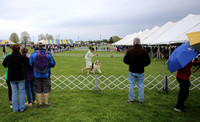 Trenton Kennel Club's 88th Annual All-Breed Dog Show